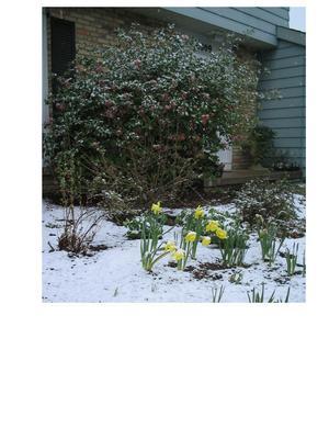 may_snow